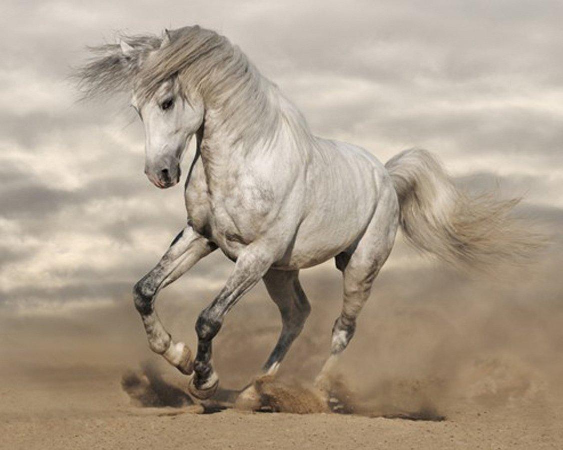 Diamond-Painting-Pakketten-Paarden