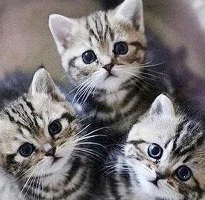 Diamond-painting-pakketten-katten