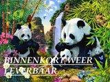 Diamond Painting pakket - Familie Panda 60x45 cm (full)_