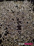 hotfix rhinestuds ss 10 kleur zilver