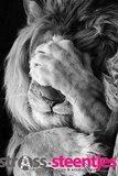 Diamond Painting pakket - Leeuw met poot voor zijn ogen 40x60 cm (full)