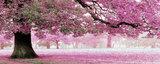 Diamond Painting pakket - Rose bloesemboom