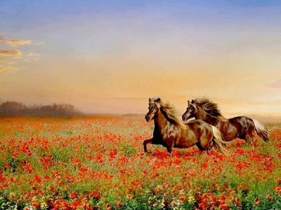 Diamond Painting pakket - Bruine paarden in een papaverveld 60x80 cm (full)