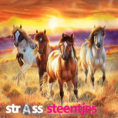Diamond Painting pakket - Vier wilde paarden in de ochtendzon 50x50 cm (full)