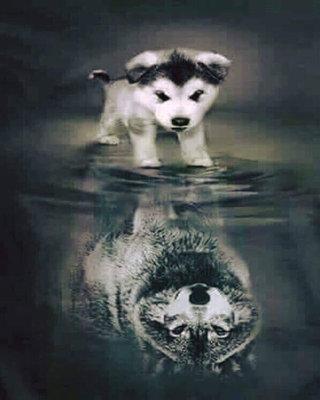 Diamond Painting pakket - Hondje ziet zichzelf als wolf in het water 40x50 cm (full)