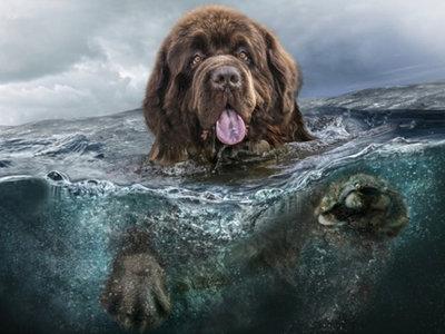 Diamond Painting pakket - Zwemmende New Foundlander hond in het water 30x40 cm (full)