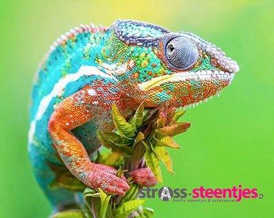 Diamond Painting pakket - Gekleurde Kameleon 50x40 cm (full)