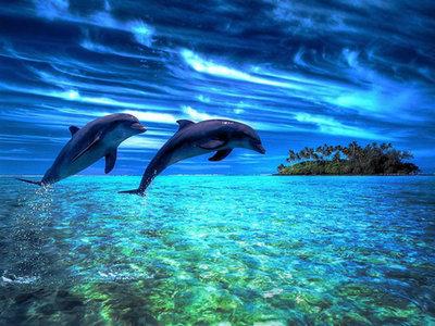 Diamond Painting pakket - Springende dolfijnen boven de zee 30x40 cm (full)