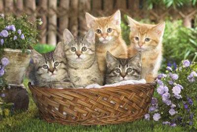 Diamond Painting pakket - Kleine poesjes kittens in een mand 50x75 cm (full)