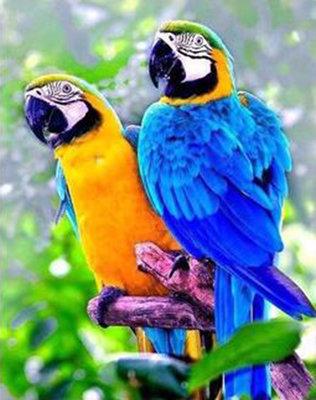 Diamond Painting pakket - 2 Blauwe gele ara papegaaien 30x38 cm (full)
