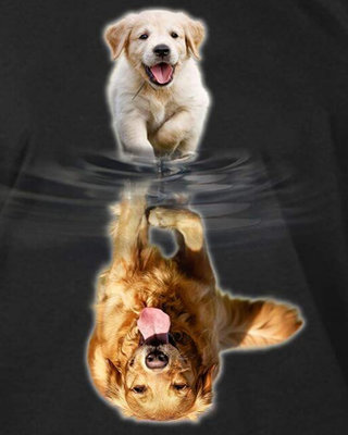 Diamond Painting pakket - Goldenretriever pup ziet zichzelf als volwassen hond in het water 40x50 cm (full)