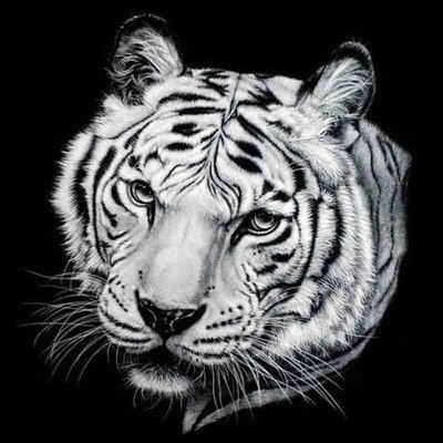 Diamond Painting pakket -  Bengaalse tijger 40x40 cm (full)