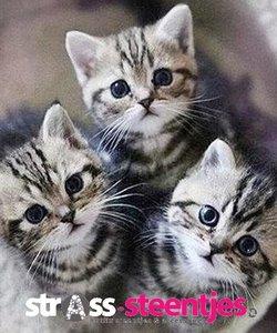 Diamond Painting pakket - Drie grijs-witte kittens kijken in de camera 40x45 cm (full)