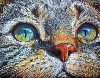 Diamond Painting pakket - Ingezoomde kattenkop 40x30 cm (Full)