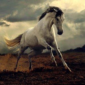 Diamond Painting pakket - Woest wit paard 40x30 cm (Full)