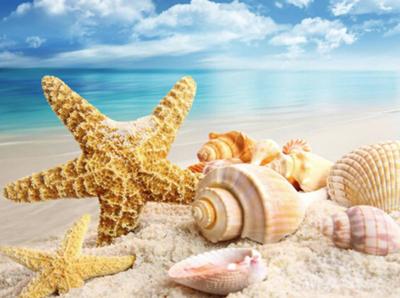 Diamond Painting pakket - Zeester en schelpen op het strand 60x50 cm (Full)