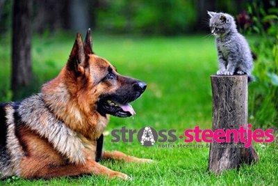 Duitse herder kijkt naar kitten op paaltje 30x45 cm