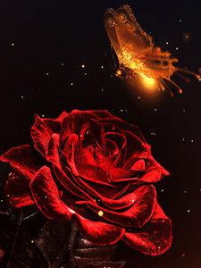 Rode roos met lichtgevende vlinder 30x40 cm