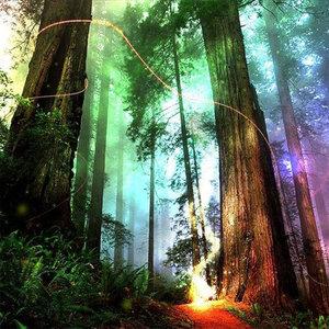 Gekleurd bos met zonnestralen 40X40 cm