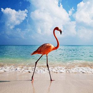 Diamond Painting pakket - Flamingo op het strand 35X35 (full)